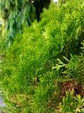 Grüner Baum schaut so nett stockfotografie
