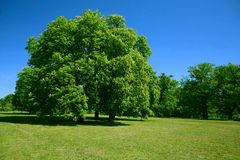 Grüner Baum und blauer Himmel Lizenzfreies Stockfoto