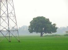 Grüner Baum und elektrischer Turm auf den grünen Gebieten Lizenzfreies Stockfoto