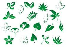 Grüner Baum und pflanzt die eingestellten Blätter Stockfotografie