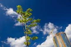 Grüner Baum und wachsendes Gebäude Lizenzfreies Stockfoto