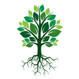 Grüner Baum und Wurzeln Auch im corel abgehobenen Betrag Stockfoto
