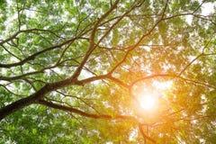 Grüner Baum verlässt Hintergrund Stockfotografie