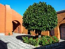 Grüner Baum von Santa Catalina Monastery in Arequipa Stockfotografie