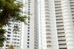 Grüner Baumast gegen riesigen weißen Hotelgebäudehintergrund Stockbild