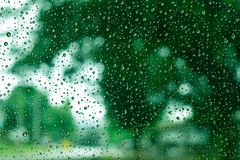 Grüner Baumhintergrund auf dem Regen Lizenzfreies Stockbild