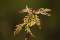 Grüner Baumsprössling wächst Symbol des neuen Lebens stockbilder