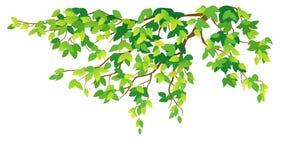 Grüner Baumzweig stock abbildung