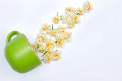 Grüner Becher und Narzissen auf weißem Hintergrund Leben Sie jetzt breathe Stockbild