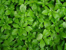 Grüner belaubter Hintergrund Lizenzfreie Stockbilder