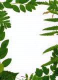 Grüner belaubter natürlicher Rand Stockfoto
