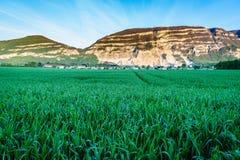 Grüner bewölkter Himmel und Berg des Weizenfeldes Stockfotos