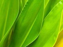 Grüner Blathintergrund stockbild