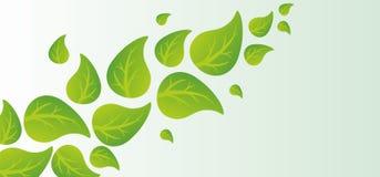 Grüner Blathintergrund Lizenzfreies Stockfoto