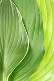 Grüner Blathintergrund Stockfotografie