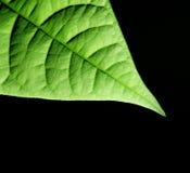 Grüner Blathintergrund Lizenzfreie Stockbilder