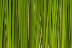 Grüner Blathintergrundauszug lizenzfreies stockbild
