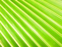 Grüner Blatt-Hintergrund Lizenzfreies Stockfoto