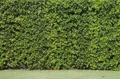 Grüner Blatt-Hintergrund Stockfotografie