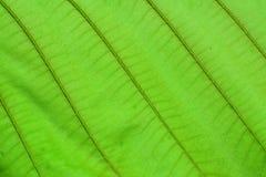 Grüner Blatt-Hintergrund lizenzfreie stockbilder