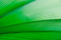 Grüner Blatt-Hintergrund Stockbilder