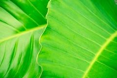 Grüner Blatt-Hintergrund Lizenzfreies Stockbild