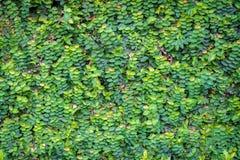 Grüner Blatt-Hintergrund Lizenzfreie Stockfotografie