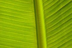 Grüner Blatt-Muster-Hintergrund Stockbild