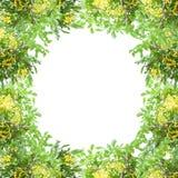 Grüner Blatt- und Blumenrahmen auf weißem Hintergrund Lizenzfreies Stockfoto