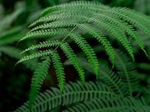 Grüner Blattbeschaffenheits-/Blattbeschaffenheitshintergrund/Kopienraum Stockfotografie