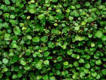Grüner Blattbeschaffenheits-/Blattbeschaffenheitshintergrund/Kopienraum Lizenzfreies Stockfoto