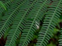 Grüner Blattbeschaffenheits-/Blattbeschaffenheitshintergrund/Kopienraum Stockfotos
