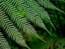 Grüner Blattbeschaffenheits-/Blattbeschaffenheitshintergrund/Kopienraum Stockfoto