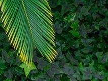Grüner Blattbeschaffenheits-/Blattbeschaffenheitshintergrund/Kopienraum Lizenzfreie Stockbilder