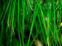 Grüner Blattbeschaffenheits-/Blattbeschaffenheitshintergrund/Kopienraum Lizenzfreies Stockbild