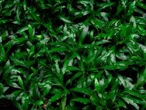 Grüner Blattbeschaffenheits-/Blattbeschaffenheitshintergrund/Kopienraum Stockbild
