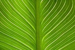 Grüner Blattbeschaffenheitshintergrund mit Licht hinten Kontrastierende helle Bänder lizenzfreies stockfoto