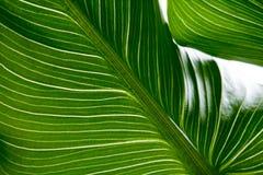 Grüner Blattbeschaffenheitshintergrund mit Licht hinten Kontrastierende helle Bänder lizenzfreie stockbilder