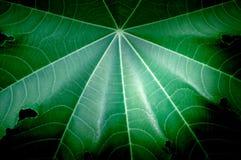 Grüner Blattbeschaffenheitsvignetten-Trauerrandhintergrund Stockbilder