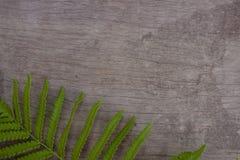 Grüner Blattfarn auf braunem Holztisch stockbild