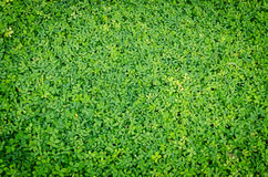 Grüner Blatthintergrund lizenzfreies stockfoto