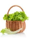 Grüner Blattkopfsalat im Korb Stockbilder
