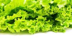 Grüner Blattkopfsalat (Lactuca Satival etwas körniges) Stockbild