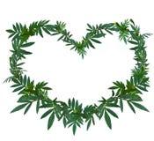 Grüner Blattkranz der Ringelblume oder des Calendula in der Herzform Lizenzfreie Stockfotos