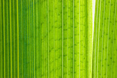 Grüner Blattmakroschuß Stockbilder