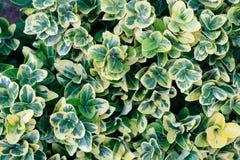 Grüner Blattmusterhintergrund, Draufsicht von oben stockfotografie