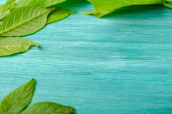 Grüner Blattrahmen auf blauem Hintergrund stockfoto