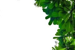 Grüner Blattrahmen auf weißem Hintergrund Lizenzfreies Stockbild