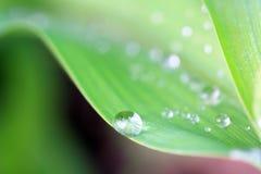 Grüner Blattregentropfen Stockfotos