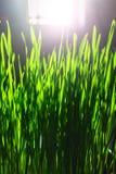 Grüner Blumenhintergrund mit Bündel Gras und schimmernden Scheinwerferlichtern Stockbild